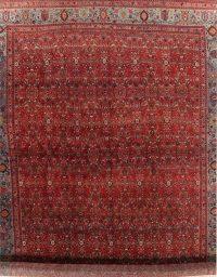 Vegetable Dye Antique Floral Bidjar Persian Wool Rug 15x25